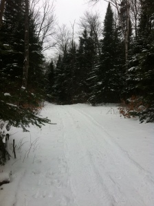 This is one of my trails that I get to enjoy year round. I can walk in this or snowshoe. It's a n extremely peaceful place. I get this place to myself most of the time.