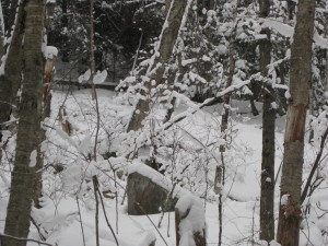 winter- this is a picture I took in my back yard while going out for a snowshoe run