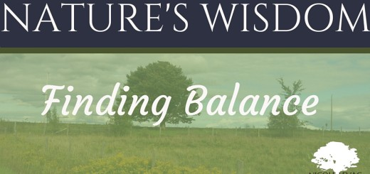 brand image of Finding Balance