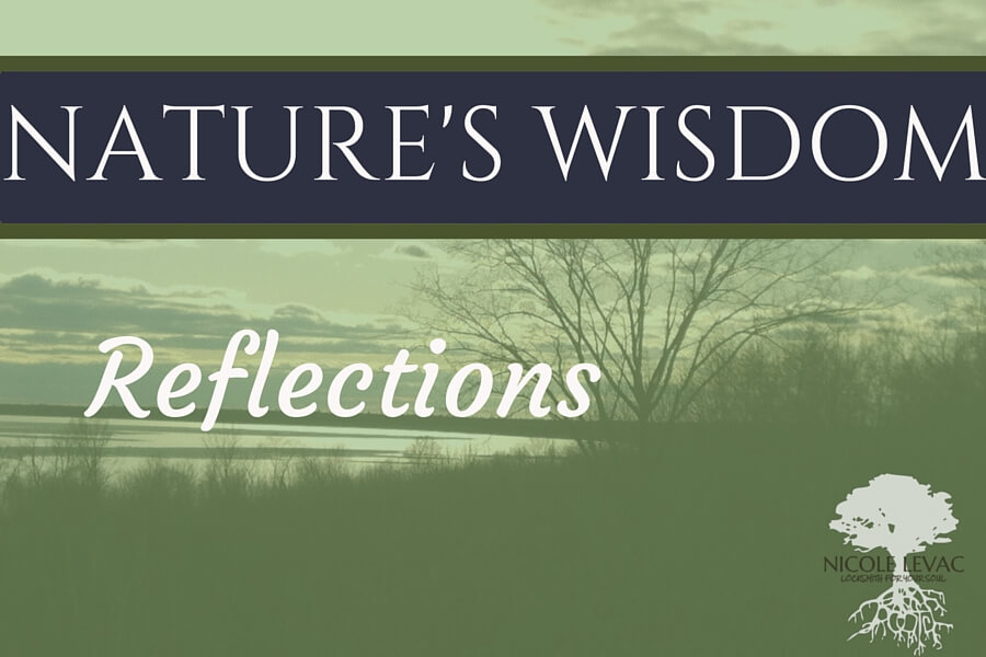 Nature`s Wisdom- Title page (3) (1)
