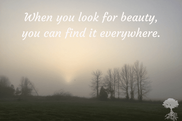 when-you-look-for-beauty-you-can-find-it-everywhere-1