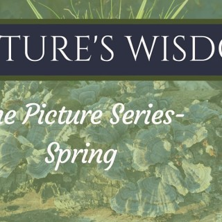 The pictures series-Spring