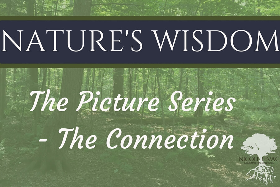 Nature`s Wisdom- Title page (8) (1)