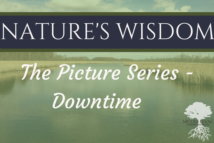Nature`s Wisdom- Title page (16) (1)