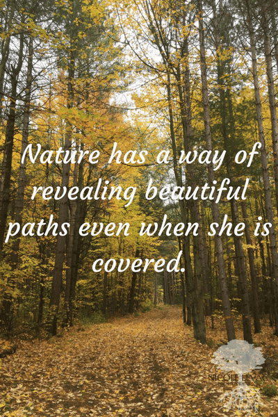 nature-has-a-way-of-revealing-beautiful-paths-even-when-she-is-covered-1