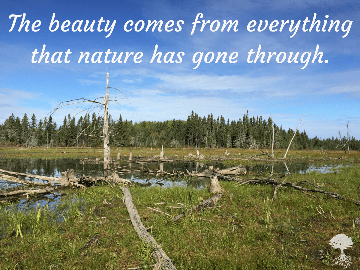 natures-wisdom-the-picture-meme-series-5-1-1